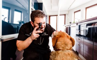 Spot On Vet Featured On Today's Veterinary Business Magazine