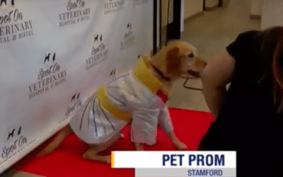 Highlights From Our Pet Prom On News 12